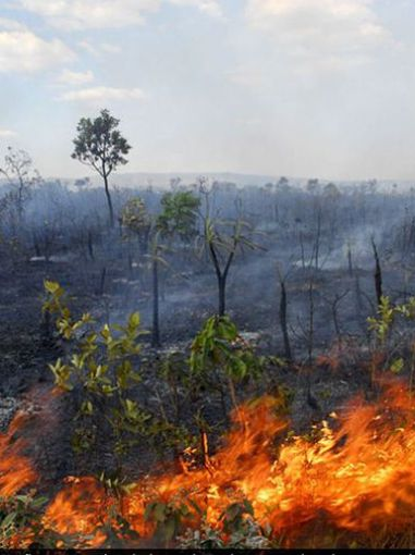 A verdade sobre as queimadas na Amazônia